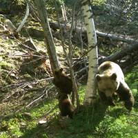 Pyrénées : les oursons ont désormais un nom