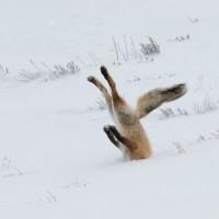 Crédit : Angela Bohlke / Comedy Wildlife Photography Awards