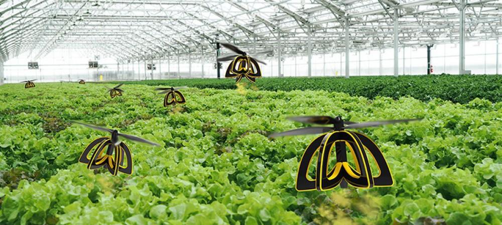 des drones abeilles pour polliniser les fleurs - reponse conso