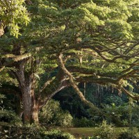 Crédit : Jean-Baptiste Barret/ Tree of the year