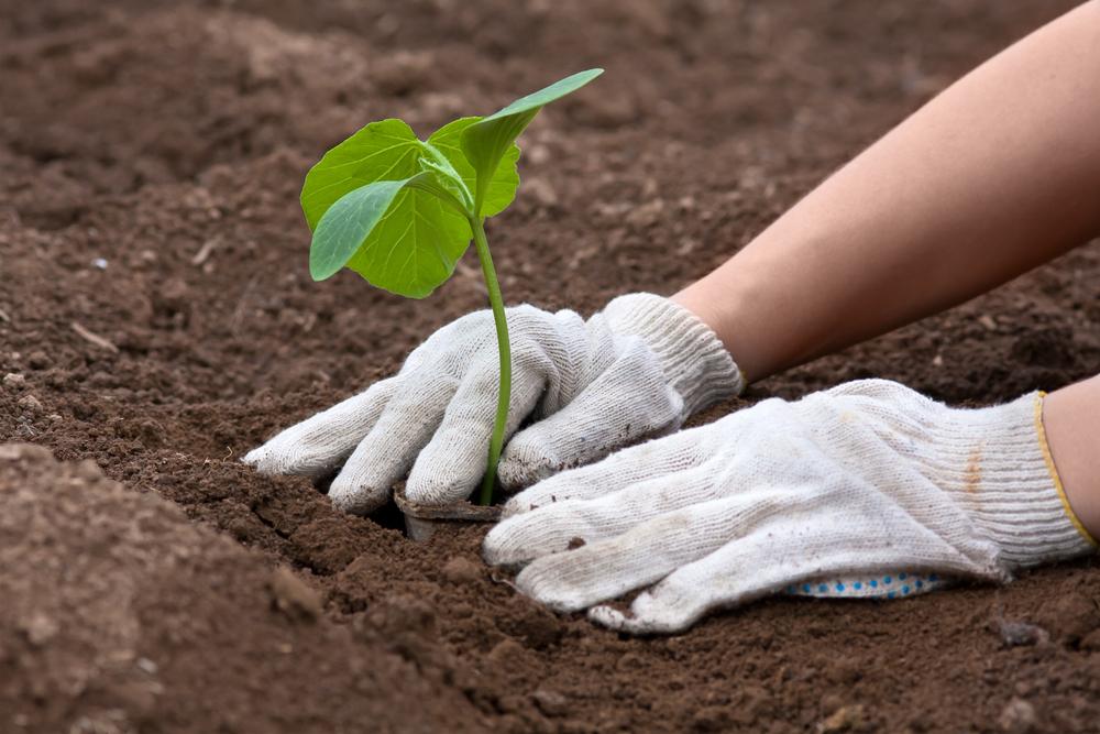 L expression avoir la main verte a t elle un sens reponse conso - Avoir la main verte ...