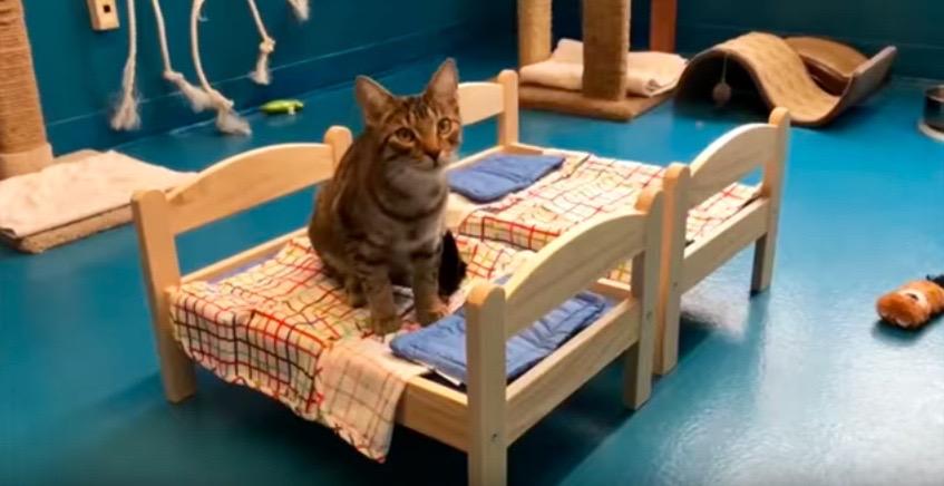 gr ce ikea les chats d un refuge peuvent dormir sur des petits lits reponse conso. Black Bedroom Furniture Sets. Home Design Ideas