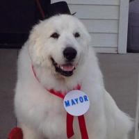 chien maire