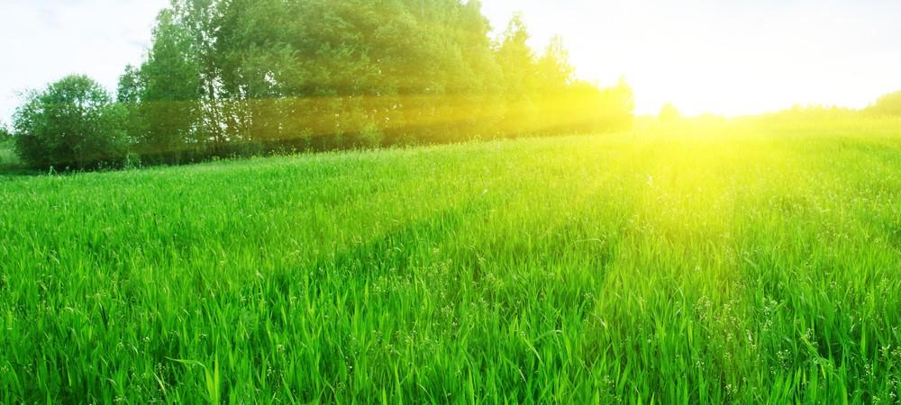 L'herbe, ce nouveau carburant pour avion