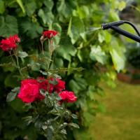 Les pesticides (enfin) interdits dans les parcs et jardins publics