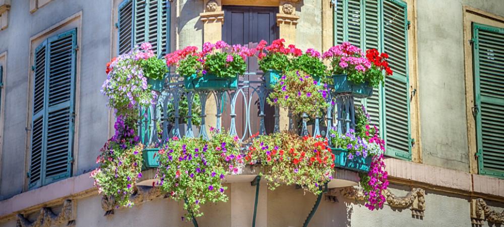 plantes sur un balcon quelles sont les r gles reponse conso. Black Bedroom Furniture Sets. Home Design Ideas