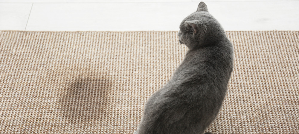 Pour éliminer l'odeur tenace du pipi de minou, pariez sur des produits naturels.