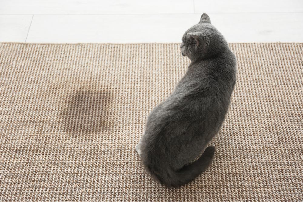 citron vinaigre blanc ces solutions naturelles contre les odeurs de pipi de chat reponse conso. Black Bedroom Furniture Sets. Home Design Ideas