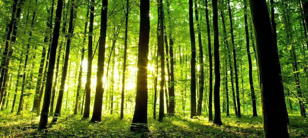 Un adolescent plant 14 milliards d'arbres dans le monde pour sauver la planète