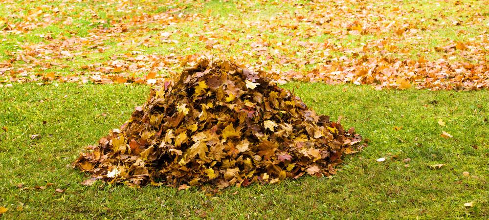 jardin que faire des feuilles mortes reponse conso. Black Bedroom Furniture Sets. Home Design Ideas