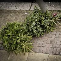 Comment se débarrasser de son sapin de Noël de façon écolo ?