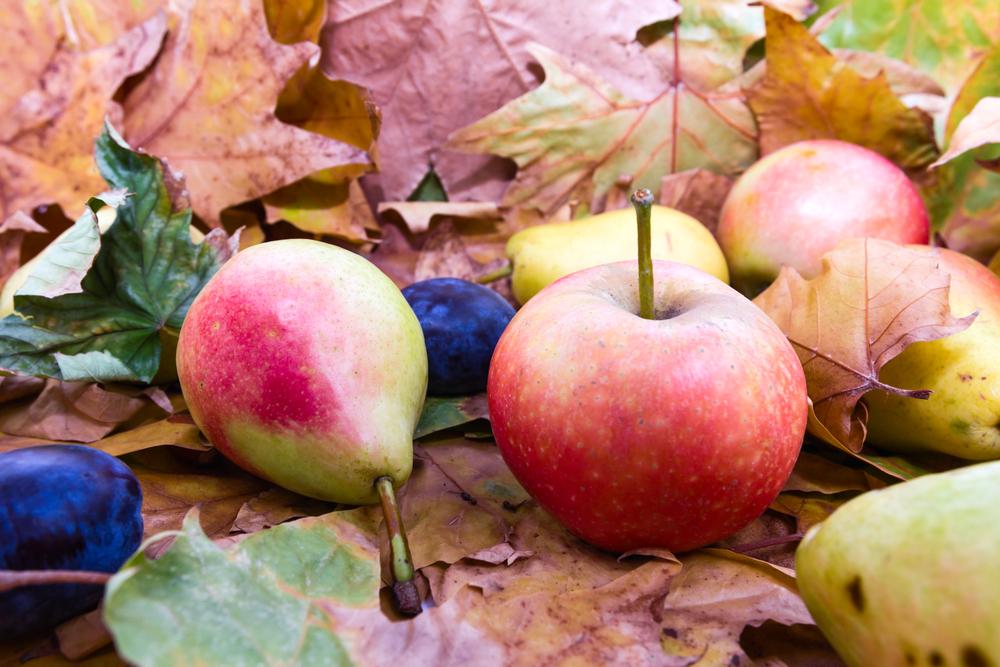 imprimez votre fiche des fruits et l gumes de novembre reponse conso. Black Bedroom Furniture Sets. Home Design Ideas