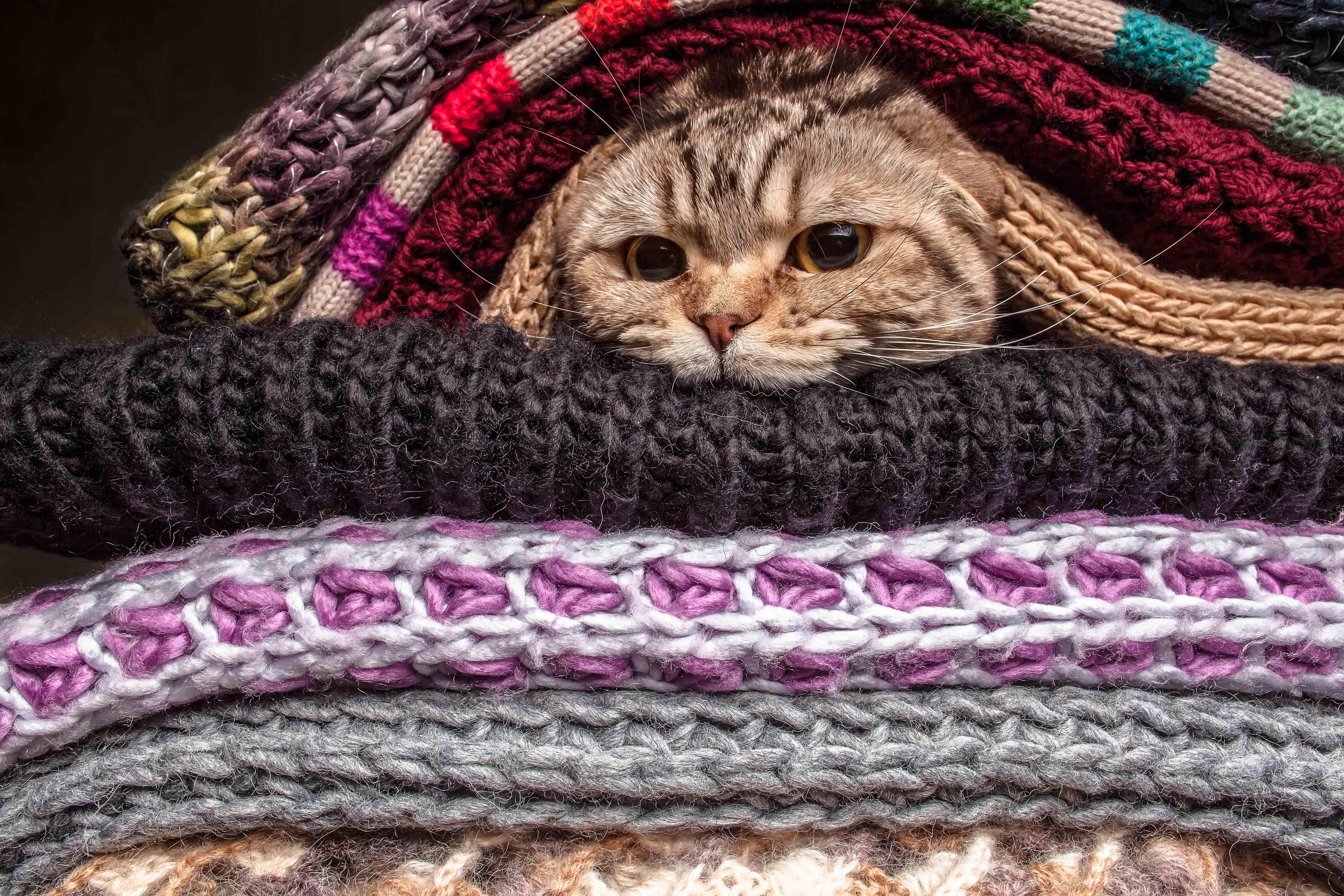 compagnie du froid 5 conseils pour protéger son chat du froid  petits félins puisent plus d'énergie  lorsqu'ils sont à l'extérieur pour se protéger du froid  le bien-être de votre  animal de compagnie ainsi que des actualités sur le monde animal.