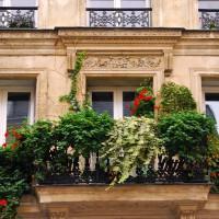 Des graines gratuites pour fleurir les balcons des Parisiens