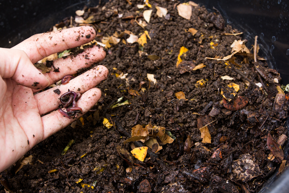 Comment faire du compost reponse conso - Faire du compost en appartement ...