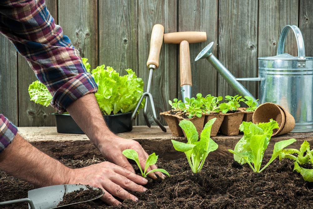 Que Faire Au Jardin En Novembre Reponse Conso