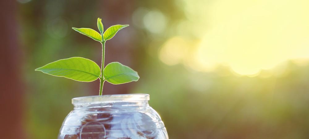 Avec EcoTree, planter un arbre devient rentable