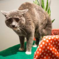 Les chats ont-ils peur des concombres ?