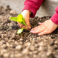 Des idées cadeaux pour apprentis jardiniers
