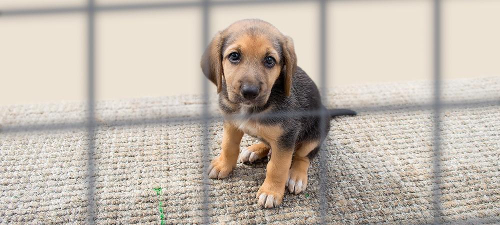 San Francisco interdit la vente de chiens et chats qui ne viennent pas de refuges
