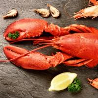 Suisse : une loi pour limiter la souffrance des homards