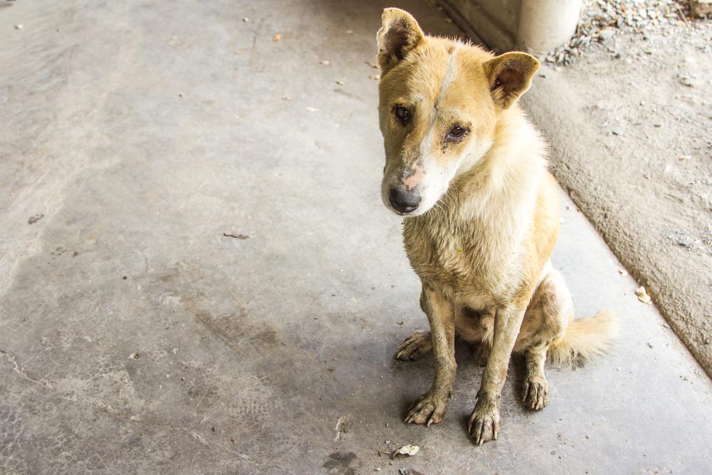 maltraitance animale   que faire et quelles sont les