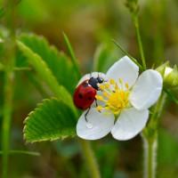 L'Agence française pour la biodiversité créée