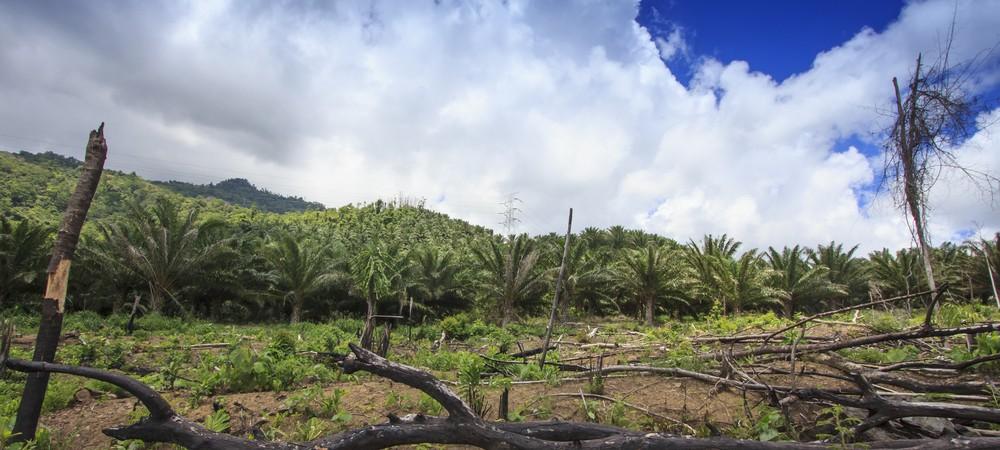 Une alternative à l'huile de palme mise au point ?