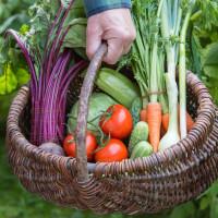Trop de fruits et légumes au jardin ? Donnez, échanger ou vendez-les !