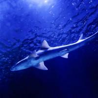 En Bretagne, un pêcheur trouve un requin dans une rivière