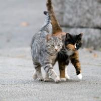 Savoie : une vieille dame lègue 300 000 euros… à des chats