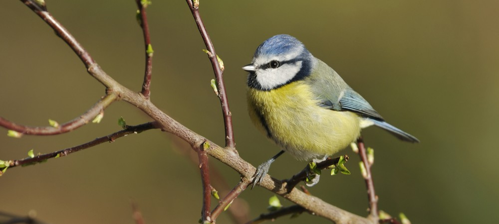 Les fran ais invit s compter les oiseaux reponse conso - Comment effrayer les oiseaux ...