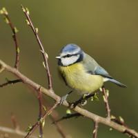 Les Français invités à compter les oiseaux