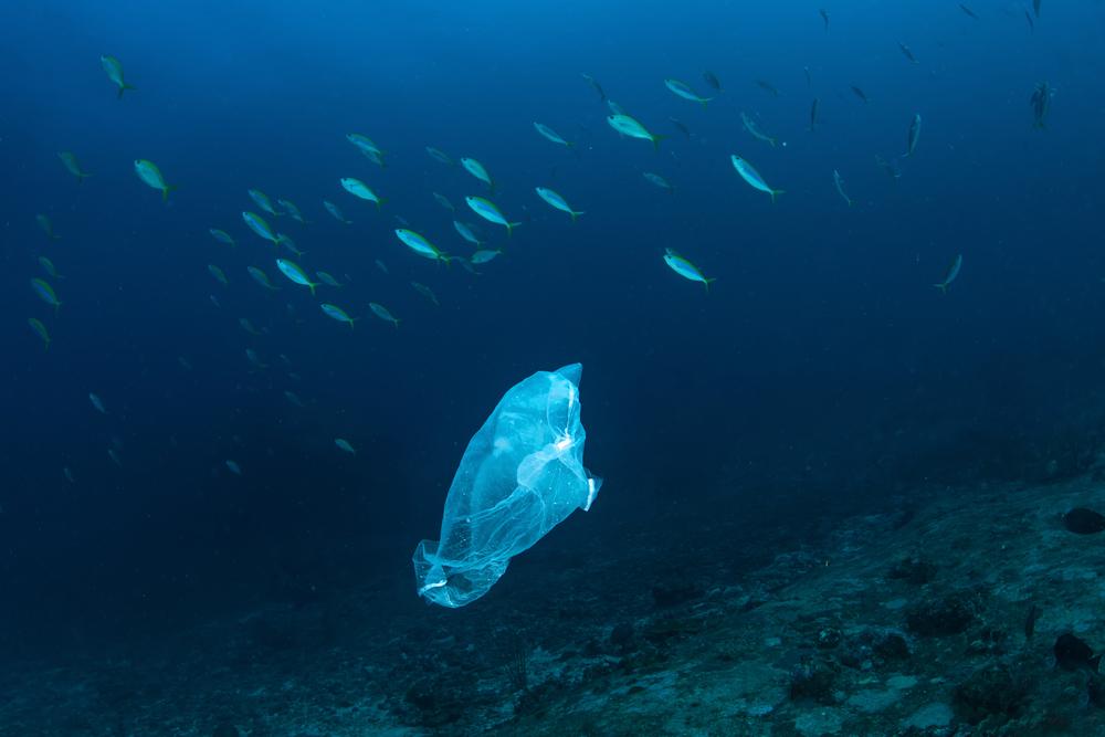 oc u00e9ans   des d u00e9chets plastiques jusqu u0026 39  u00e0 10 000 m u00e8tres de