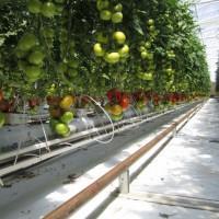 Photo : Sundrop Farms