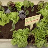 Dans ce supermarché, on cueille soi-même ses légumes.